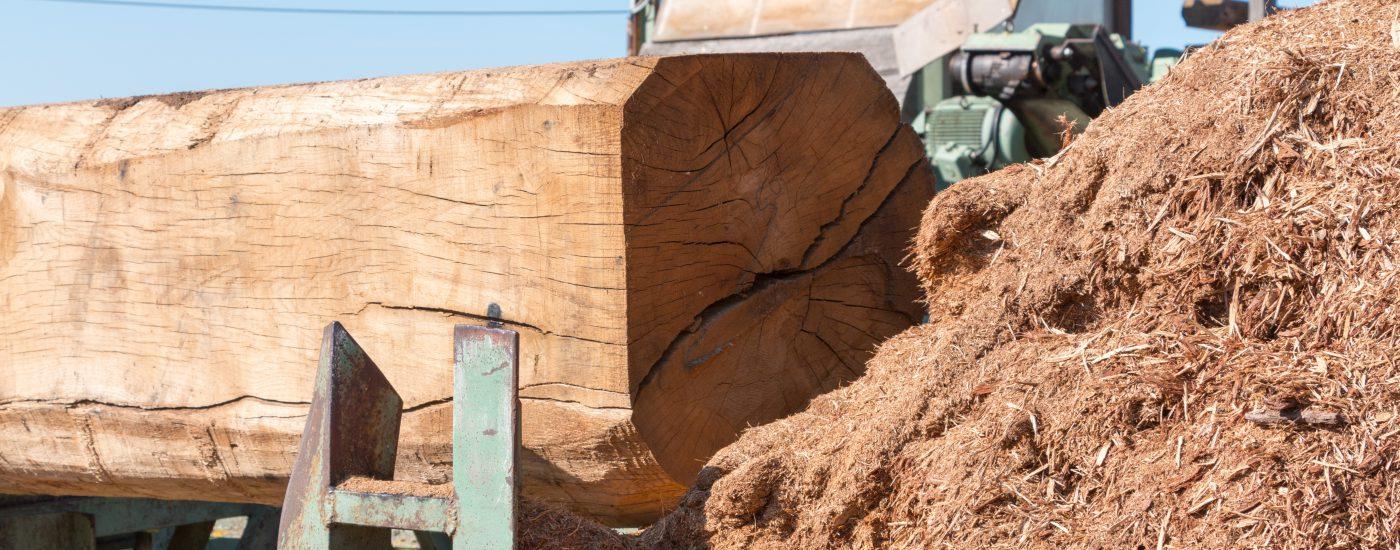 Sägewerk Voit - Stimmungsbild Baumstamm beschnitten mit Holzspänen