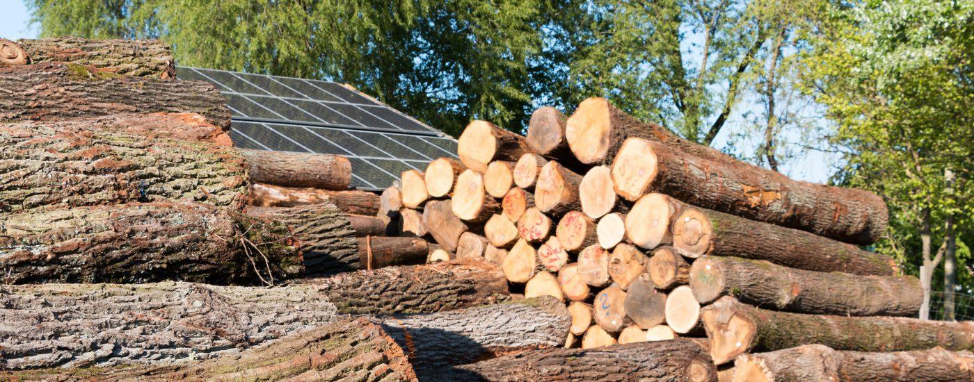 Sägewerk Voit - über Baumstämme auf Dach schauen 01