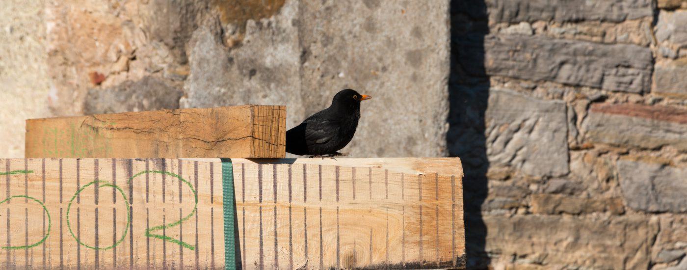 Sägewerk Voit - Stimmungsbild Vogel sitzt auf Holzbalken